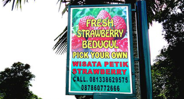 Fresh Strawberry Bedugul : Agrowisata Strawberry di Pulau Dewata
