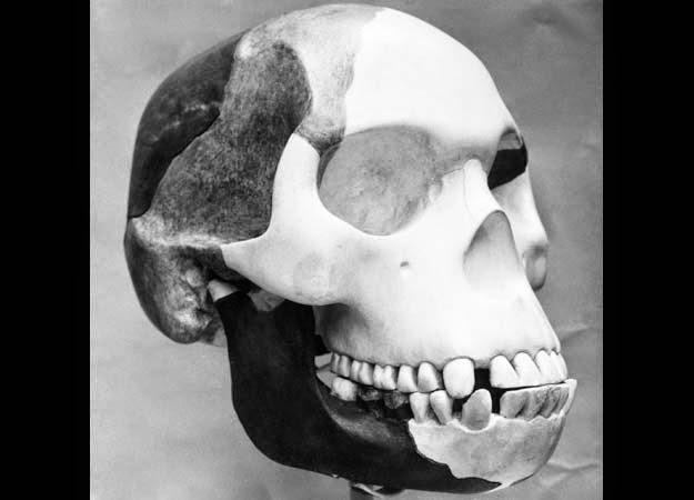 Manusia Piltdown atau Eoanthropus dawsoni, rekayasa manusia kera yang tidak hanya mengecoh para paleontologis, tapi seluruh orang di dunia. (National Geographic)