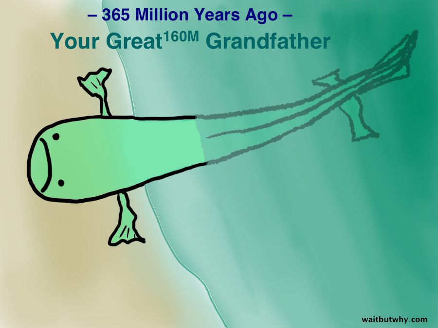 Meet Your Ancestors (All of Them) - Wait But Why