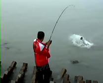 Gila Mancing Dapat Ikan Barramundi Monster