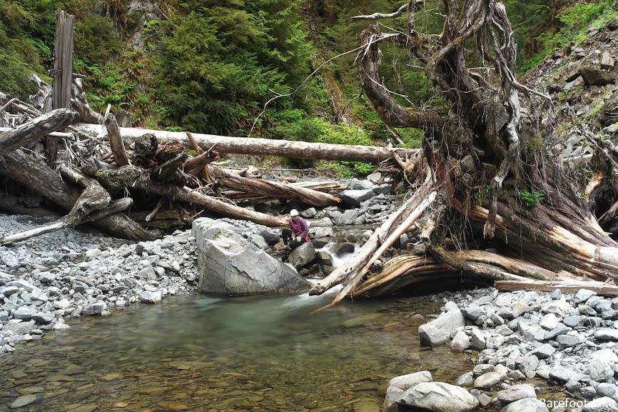 Big Creek Trail Olympic