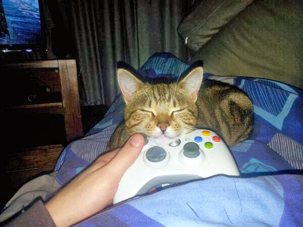 Funny cats - part 91 (40 pics + 10 gifs), cat sleeps on video game pad