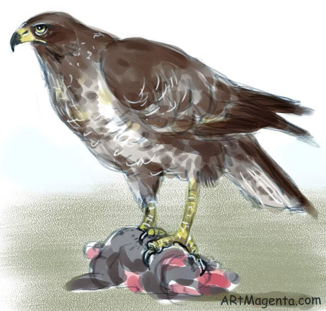Common Buzzard, a bird sketch by Artmagenta