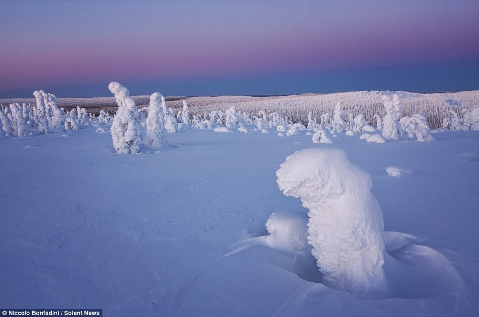 Amazing Frozen Trees in The Arctic Look Like An Alien World
