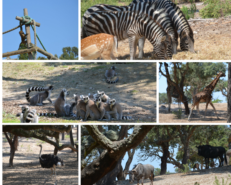 badoca_safari_park_1