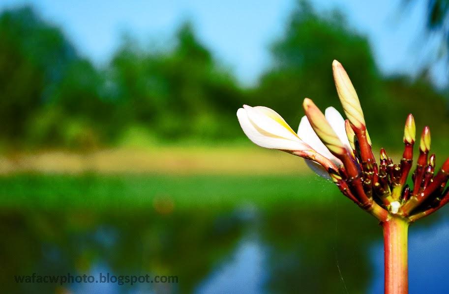wafacw : Kemboja