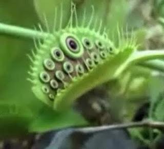 Tanaman Aneh Dan Mengerikan Mirip Alien [ www.BlogApaAja.com ]