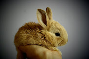 Ask Canada's MP to support the cruelty-free cosmetics act