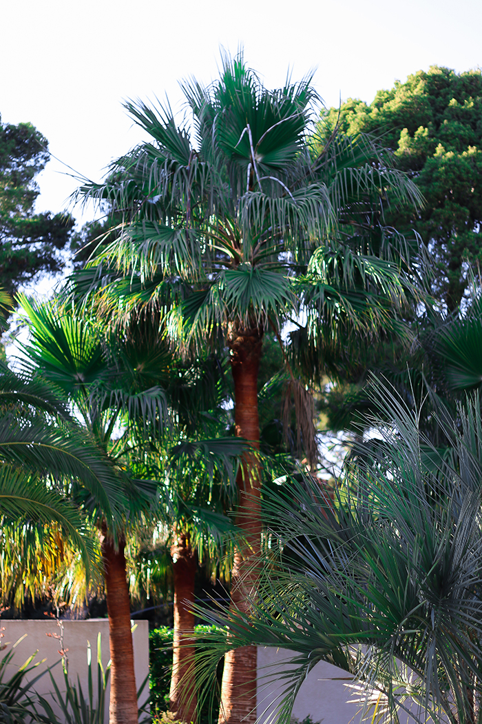 villa cassis palm tree
