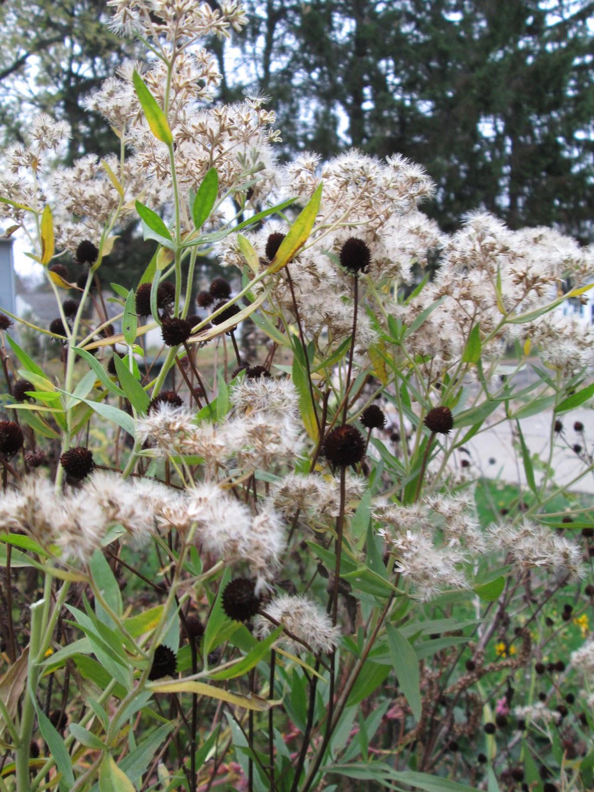 wildflowers that attract bees Joe-pye-weed