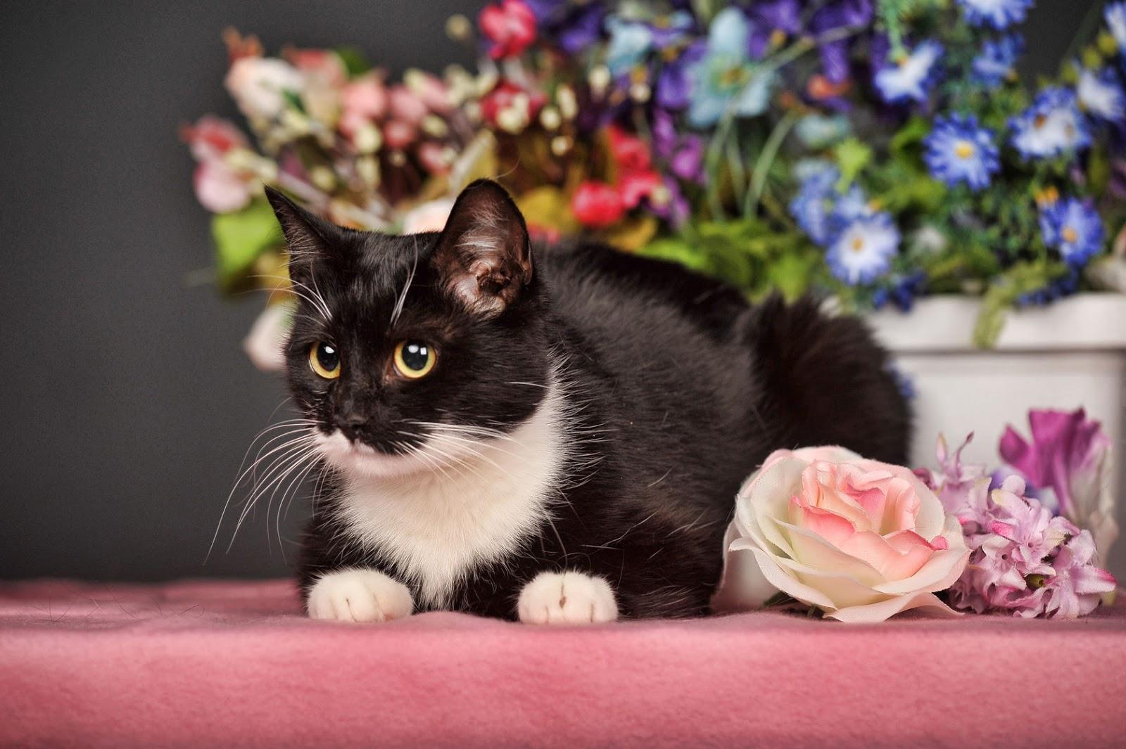 BANCO DE IMÁGENES: Gatito con flores - Cute little cat - Minino