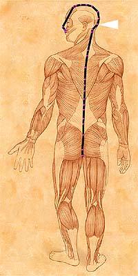 jian shu syracuse acupuncture benefits - photo#2