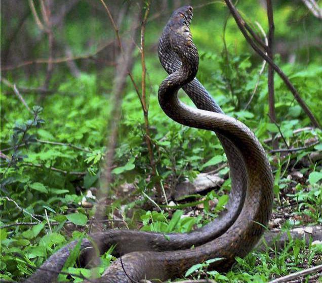 Anaconda Snake Wallpapers HD  Apps on Google Play
