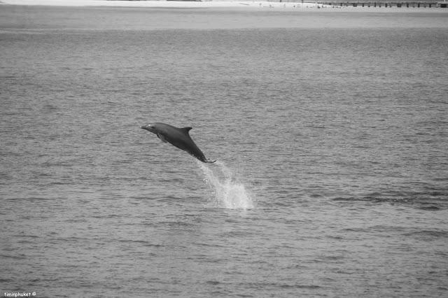 dolphin+trip.3.jpg