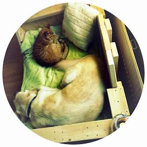 Hond L. en Kater B.