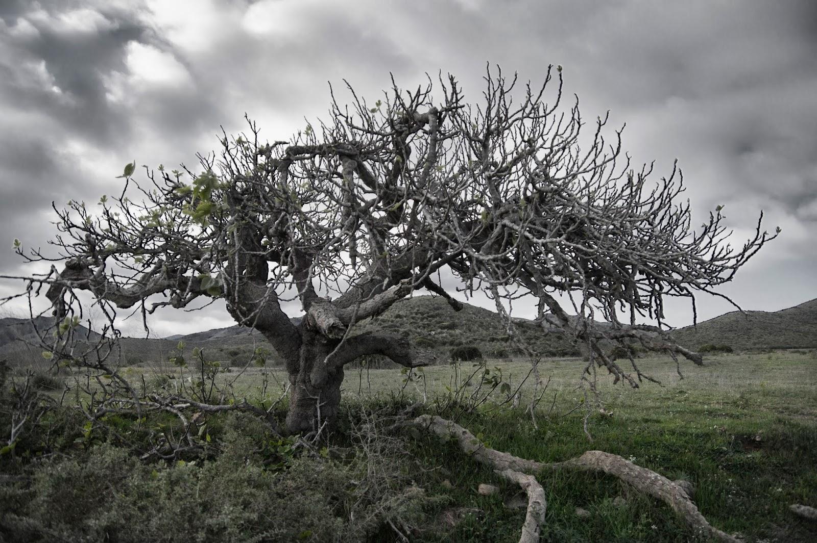Iglesia de trujillo centro 13 el rbol sin frutos for Arboles de hoja perenne sin fruto
