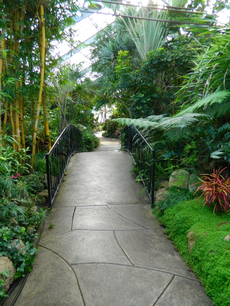 Centennial Park Conservatory path tropical house by garden muses-not another Toronto gardening blog