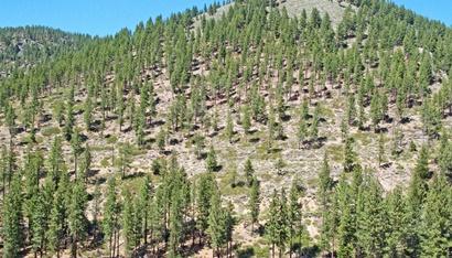 Proyecto de Reforestación - Árboles Jóvenes