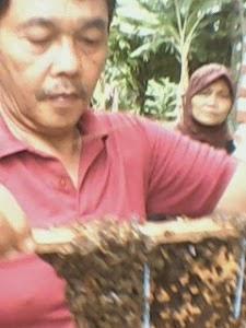 panen madu hutan
