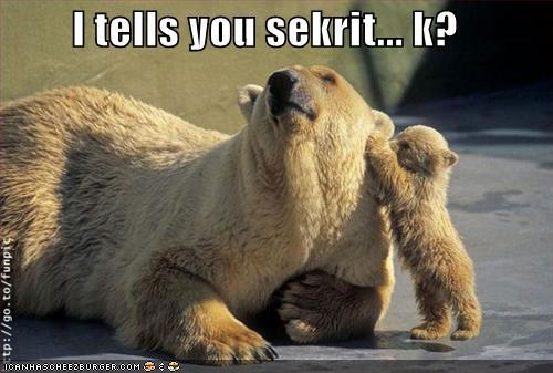 Funny-bear5.jpg