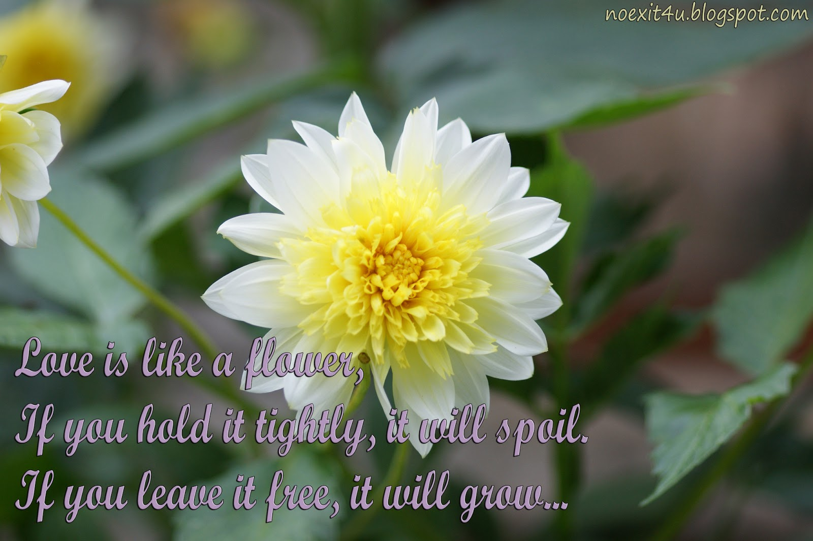 HD QUOTES FLOWER