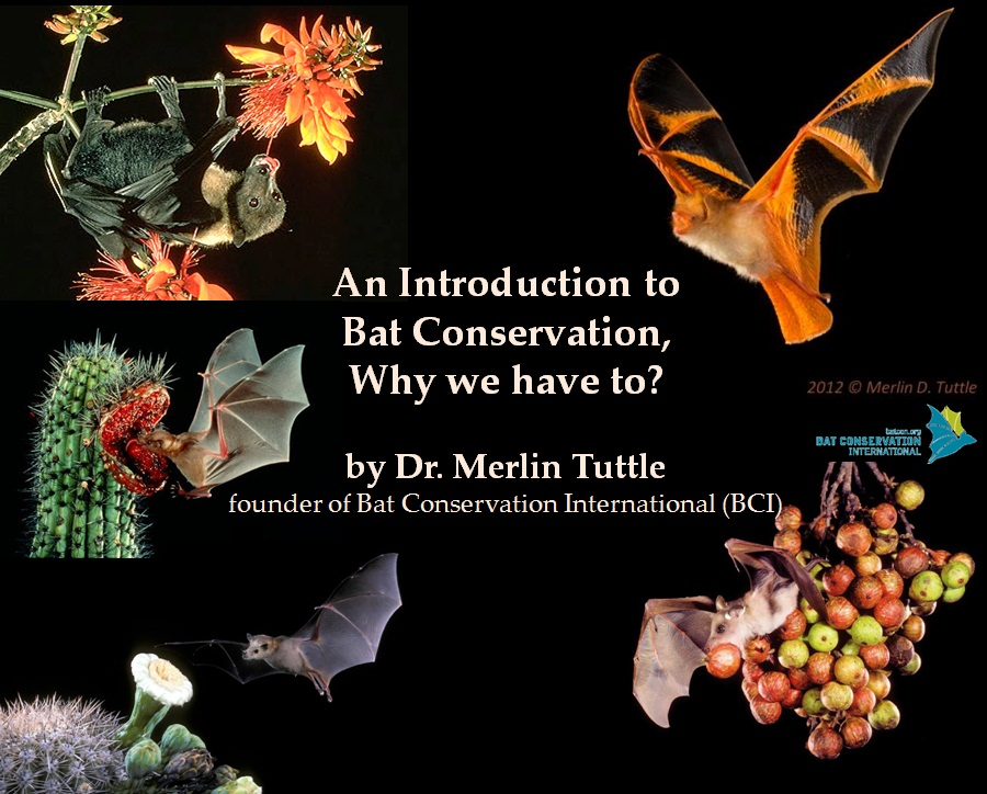 bat introduction Introduction overview  how are bats studied  bats of utah  powered by create your own unique website with customizable templates.