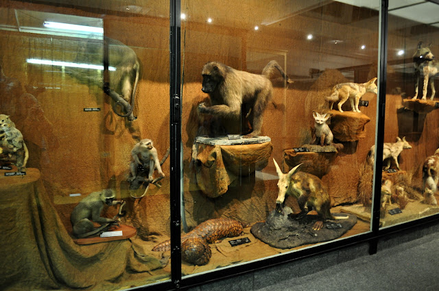 What Am I Doing South African Museum Cape Town Taxidermy