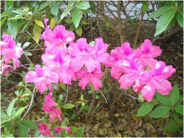 Vida a lo verde living in green ideas de plantas que for Arbustos con flores para jardin
