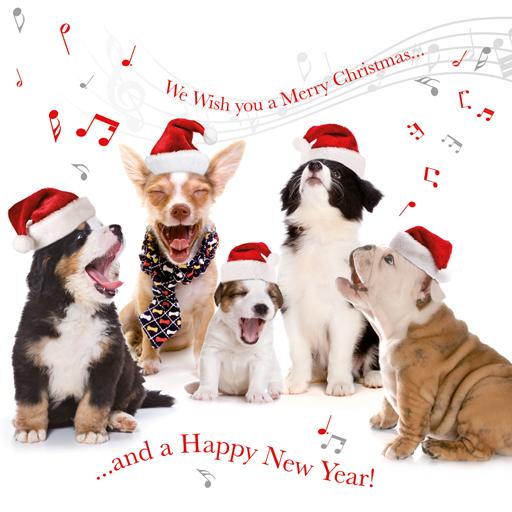 Hondenuitlaatservice Sparky Merry Christmas Everybody