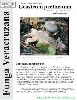 Geastrum pectinatum (Gasteromycetes: Geastraceae)