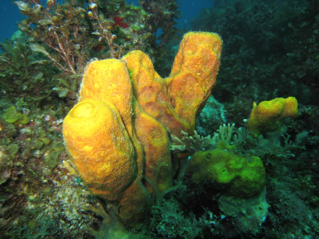 Sponge Animal Wildlife