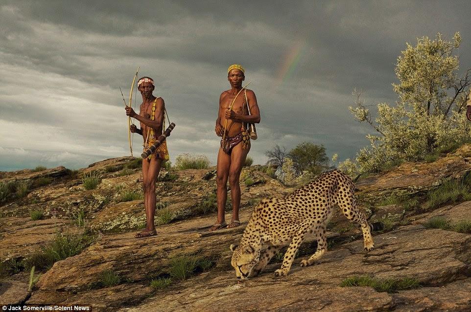 يسير الفهد بجانب الصيادين