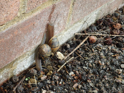 Two Snails going in opposite directions. Just like them I don't know which way is up this week!