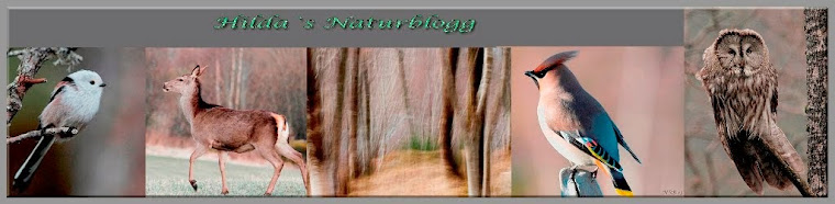 Hilda`s Naturblogg