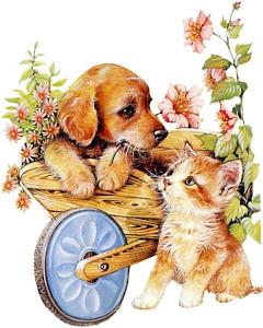 Proteja os animais!!!