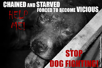 STOP DOG FIGHTING IN INDONESIA!