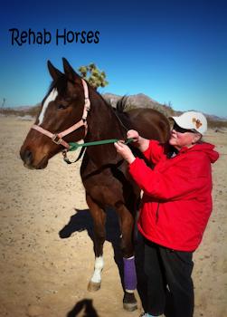 Rehab Horses