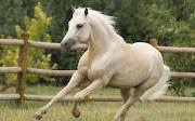 Caballos Blancos Corriendo Imágenes de Animales caballos corriendo imagenes de animales
