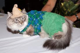 baju kucing