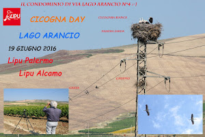 CICOGNA DAY 2016 AL LAGO ARANCIO
