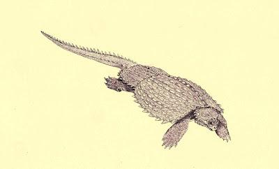 Cyamodus placodontia