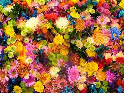 Flores - Dr. Bach