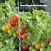 Home Gardening Book PDF