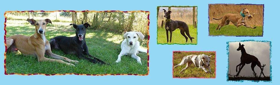Alles über Ohrenhund Laky, Krawallkeks Lucas, Nasenbär Rapido und ihre Freunde!