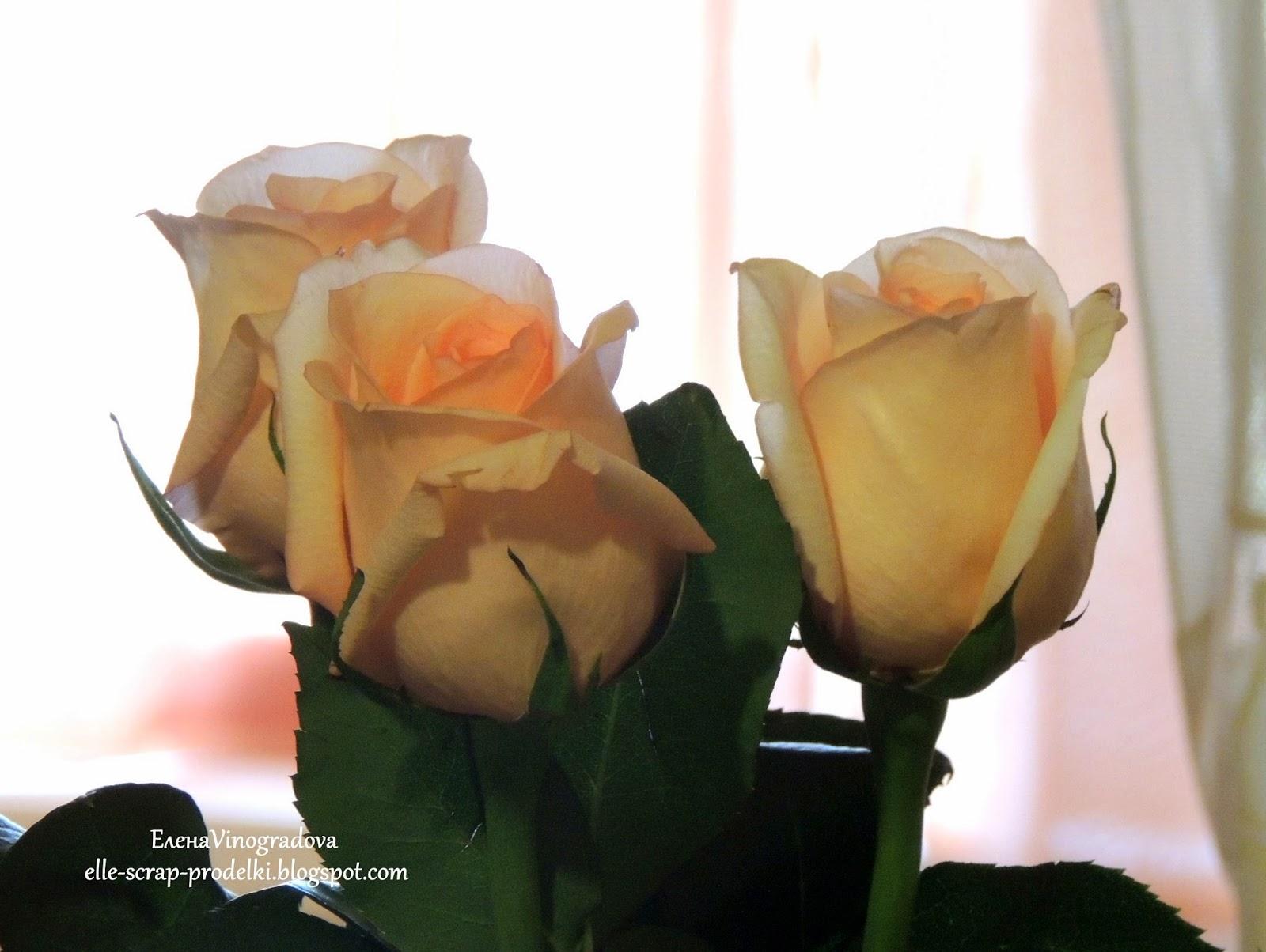 Елена Vinogradova. розы