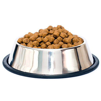 food plate dogs image search results