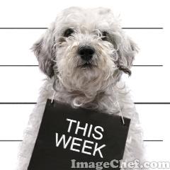 this week image courtesy of imagechef.com