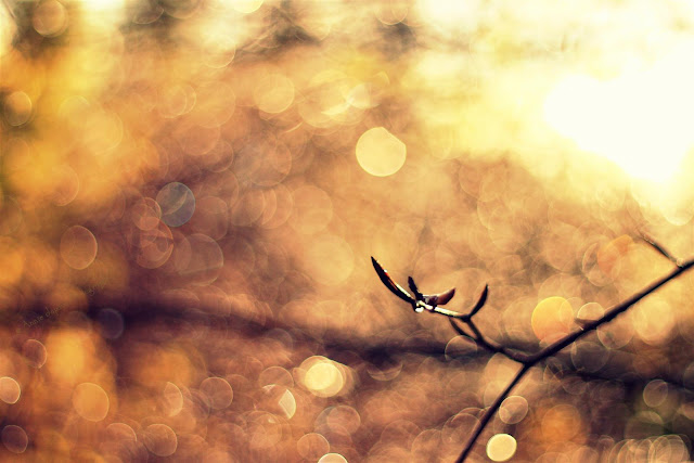 golden sunlight, branches with raindrops