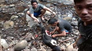 Foto pembantaian beruang madu