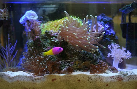 how to raise ph in saltwater tank